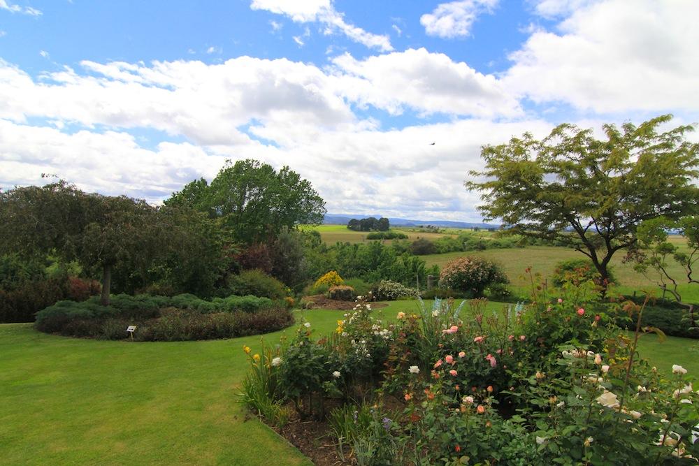 ericvale_roses_tasmanian_rose_gardens_5