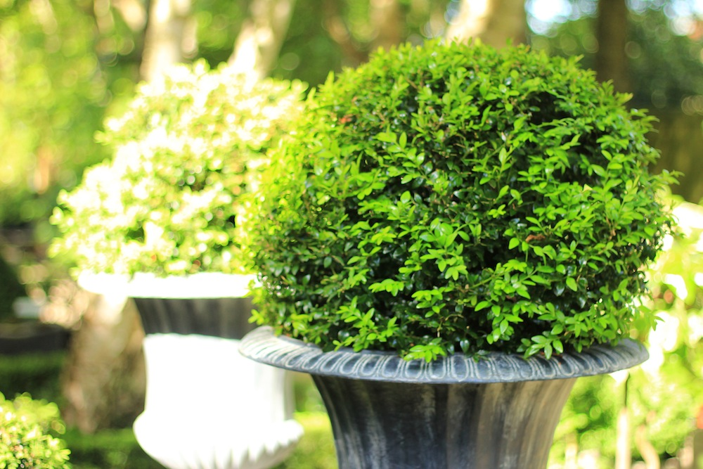 Plant Sourcing and Supply