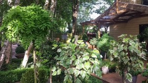 topiary 2